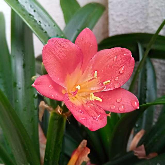Detail květu po dešti