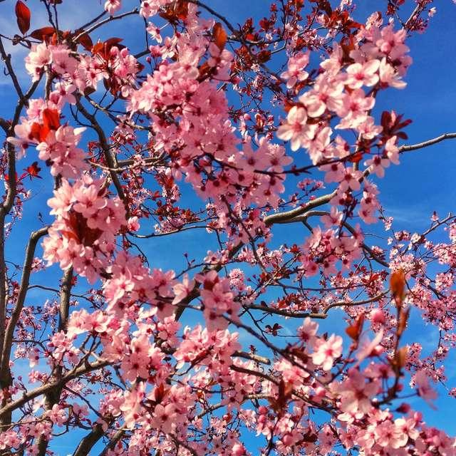 #tree #flowers