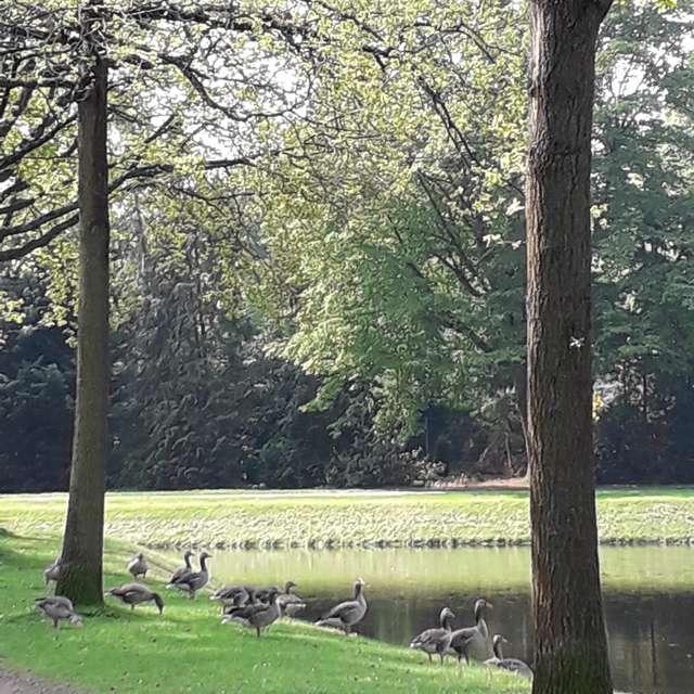 Enten im Park
