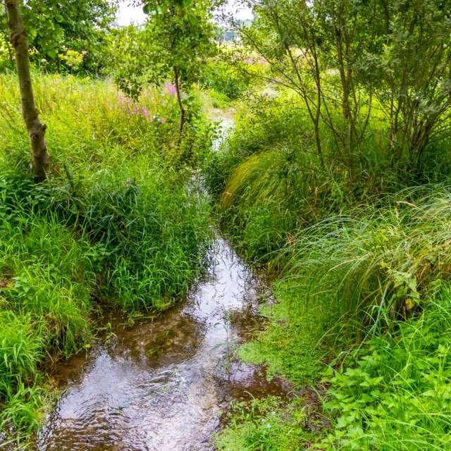 Idyllic Creek as curvy river