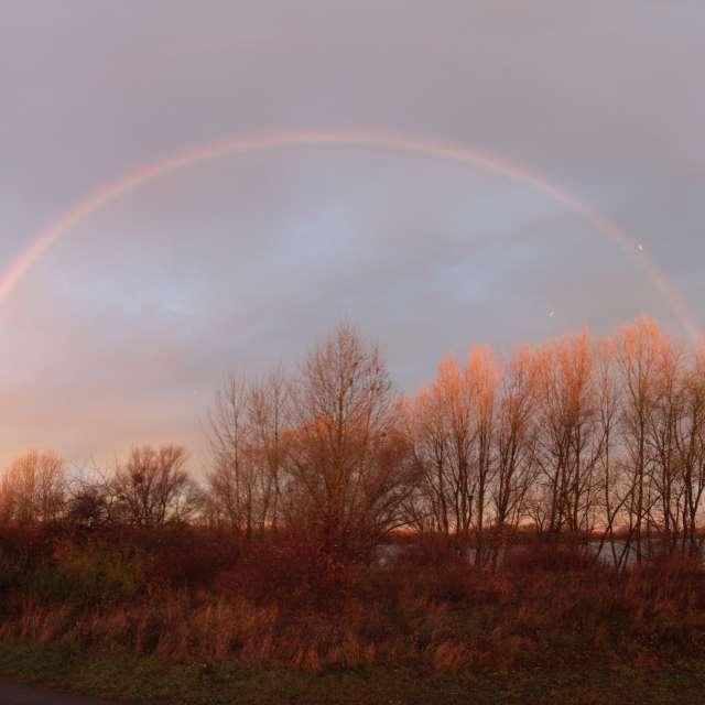 Regenbogen am Salbker See