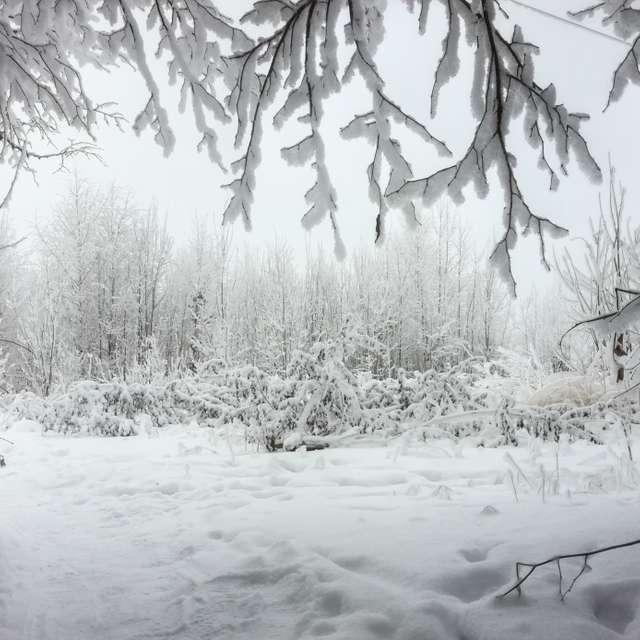 Дорога из леса зимой