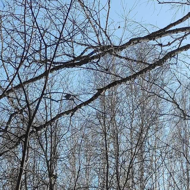 Лесные птички