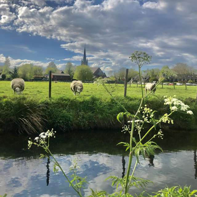 Sheep/clouds