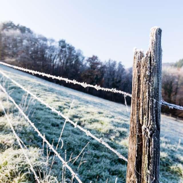 Zaun mit Rauhreif am Morgen