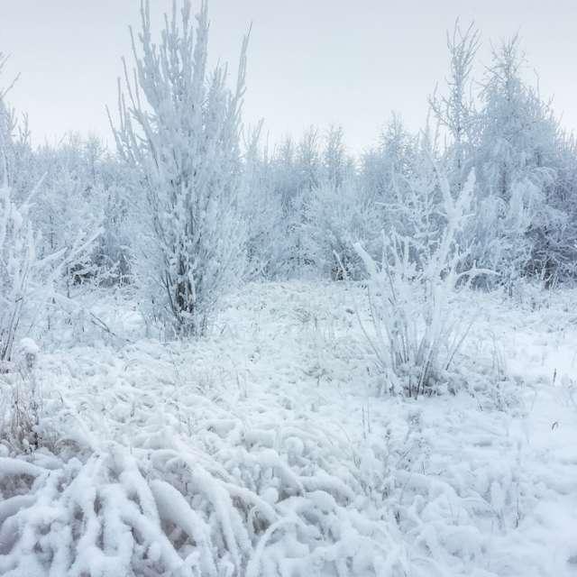 Зимняя поляна