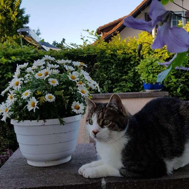 Kater und Blumen