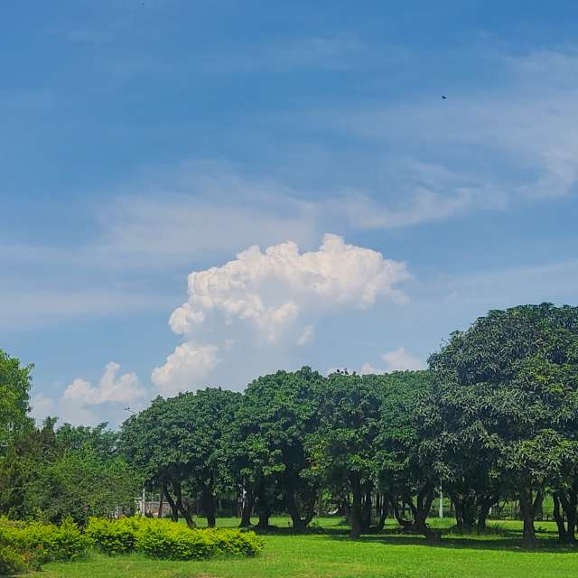 藍天雲絲雲群在綠色園區上遊蕩