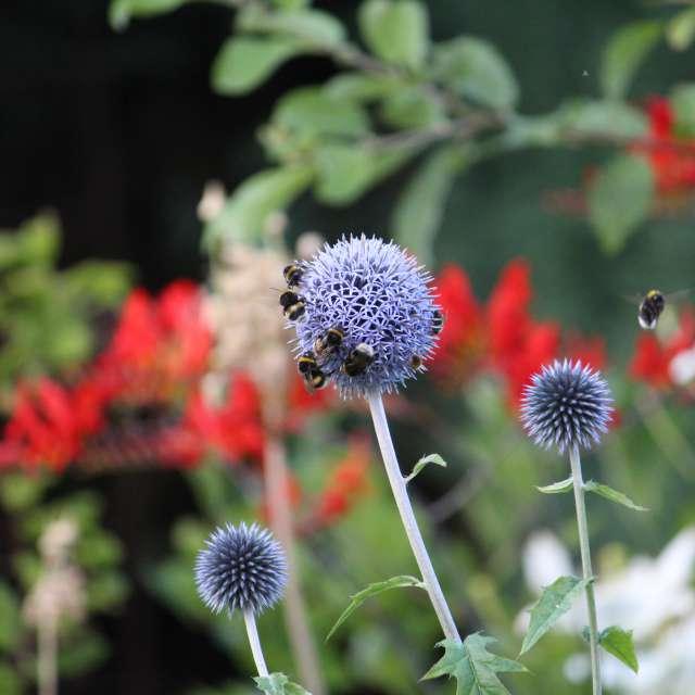Gesunder Garten