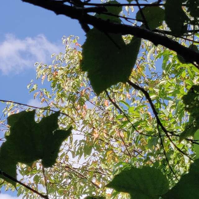 wellcome autumn