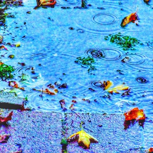 Rainy Autumn Afternoon