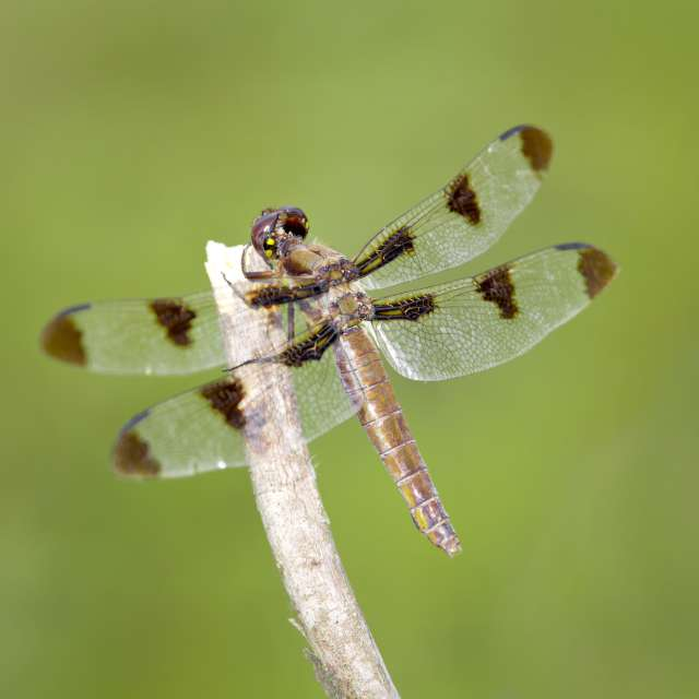 Dragonfly explorations