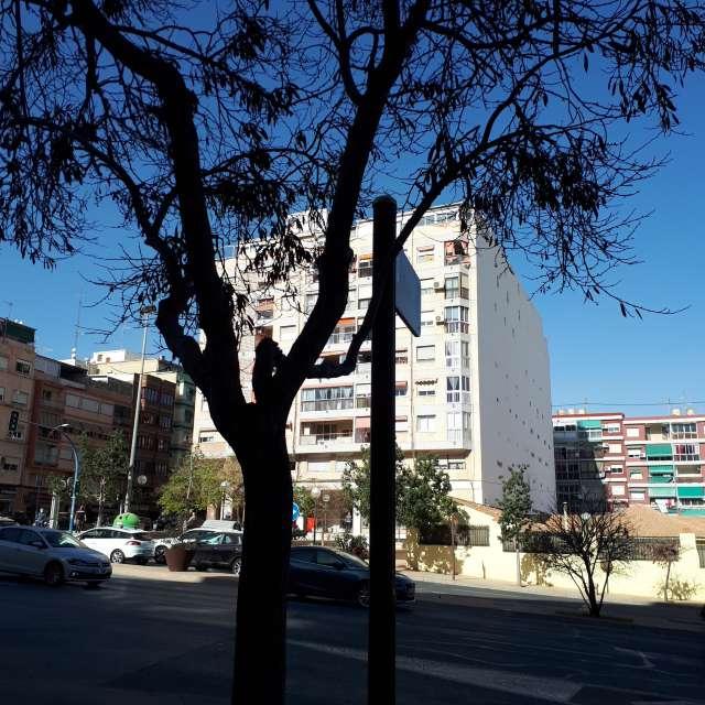 Avenida novelda