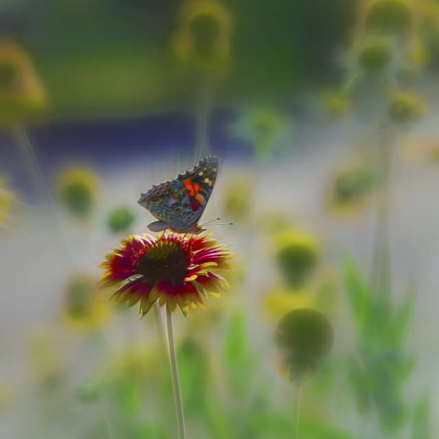 Etude #190615DSC0035.Butterfly