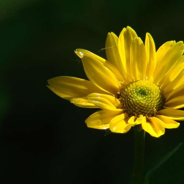 Pflanze Anlage. Wettervorhersagen mit schönen Fotos von Михаил Гавриков Fotos Welt