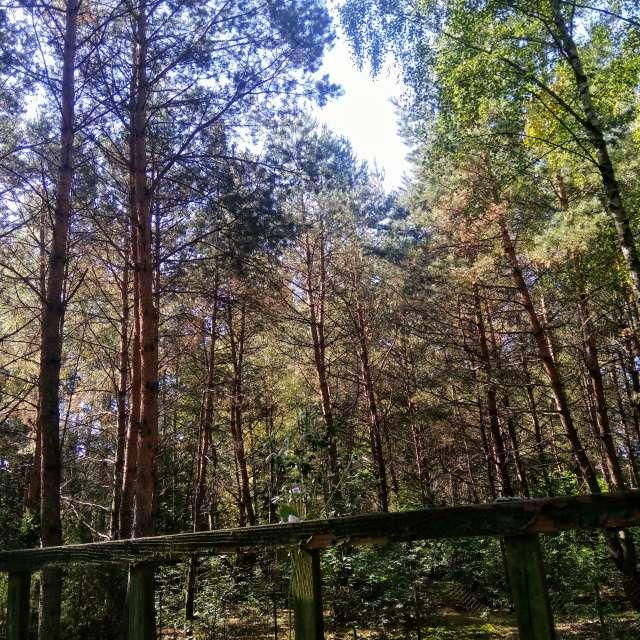 Niebo wśród drzew