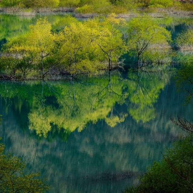新緑、風もなく静かな朝でした。空気が美味しい❗