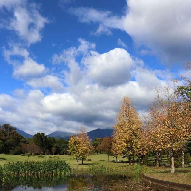 池のある公園秋になる