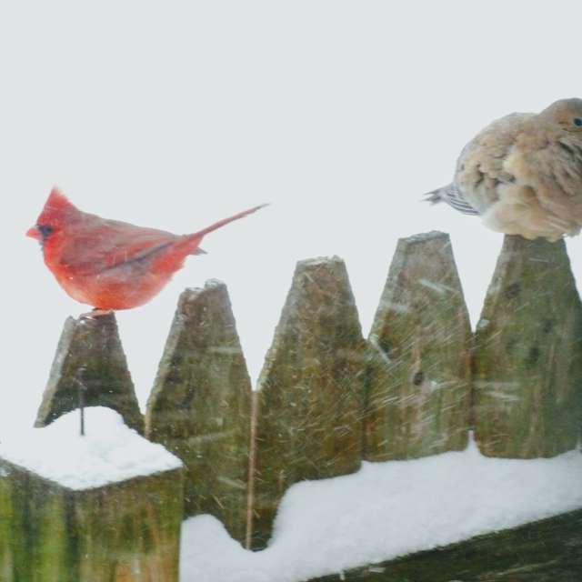 Birds in Snow Storm