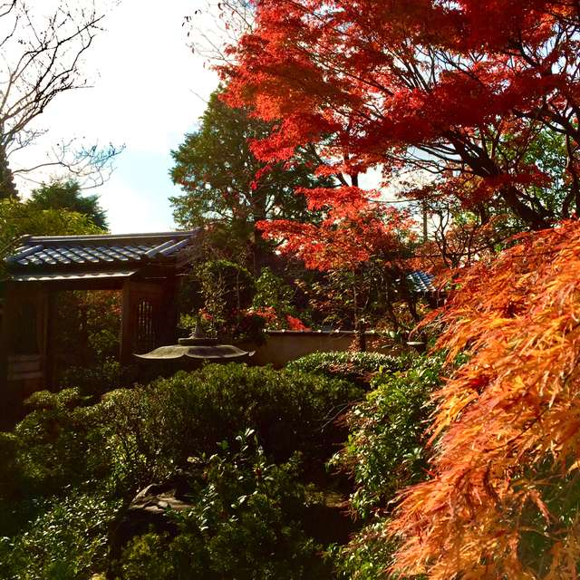 霊源院の庭園