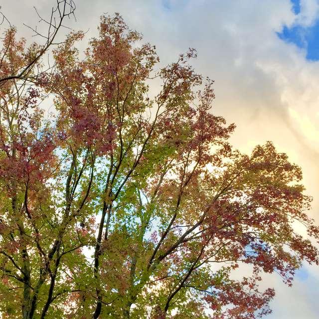 夕暮の幻想的な斑紅葉