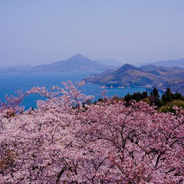 春霞の瀬戸内と満開の桜