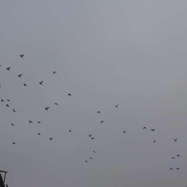 Palomas en el cielo