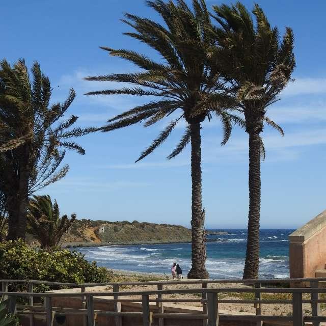 palmbomen aan de kust