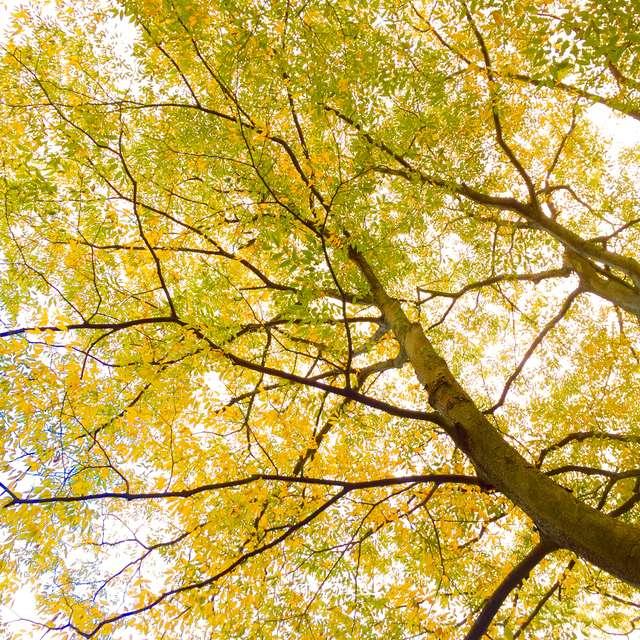黄金色に染まる木々