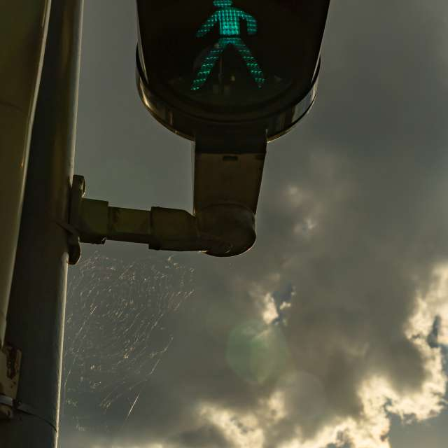 Traffic light and spider web