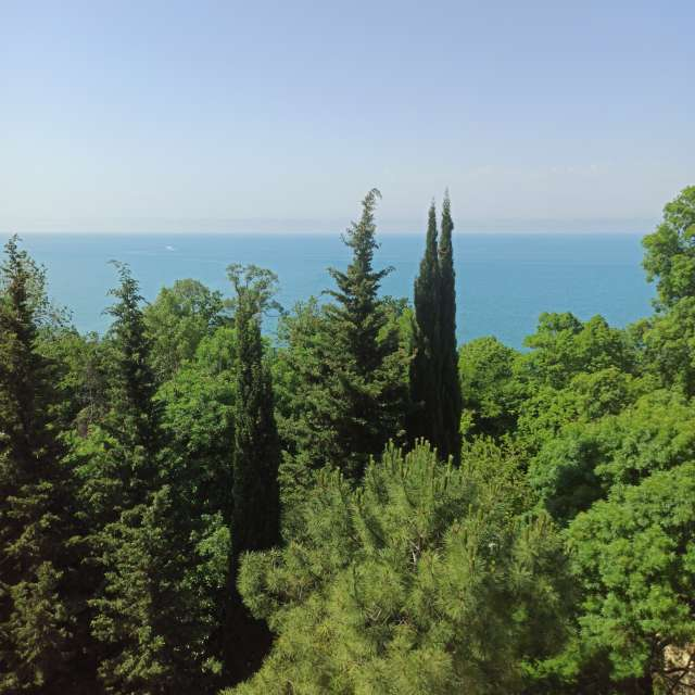 Trees & Black Sea