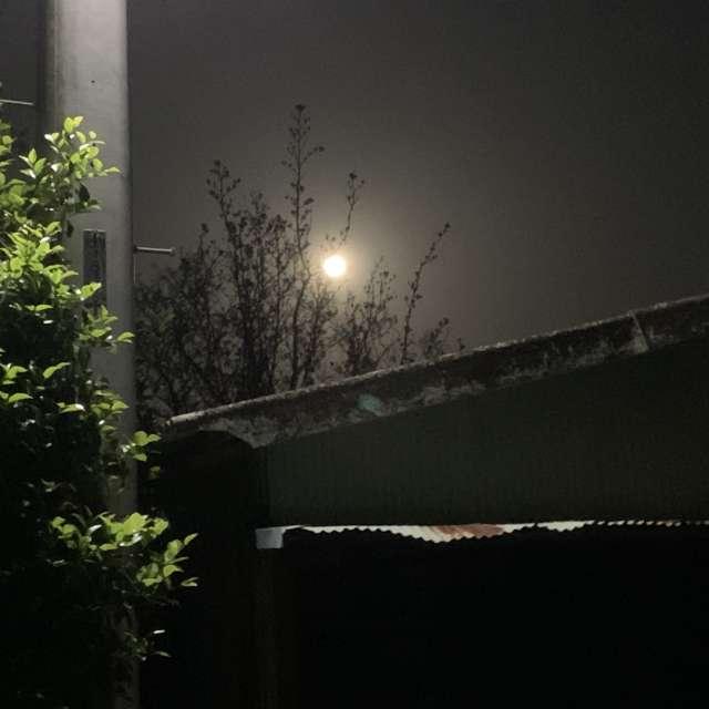 満月とカエルの合唱