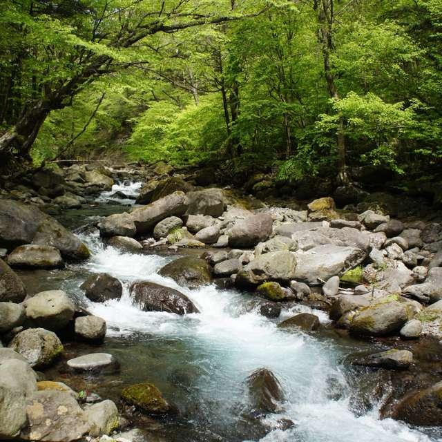 尚仁沢湧水群の新緑