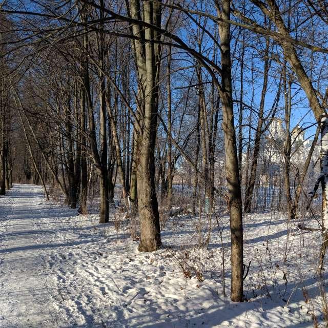 Зимний парк в Истре