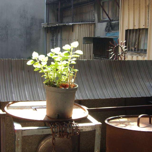 台南永楽市場 an old market.2