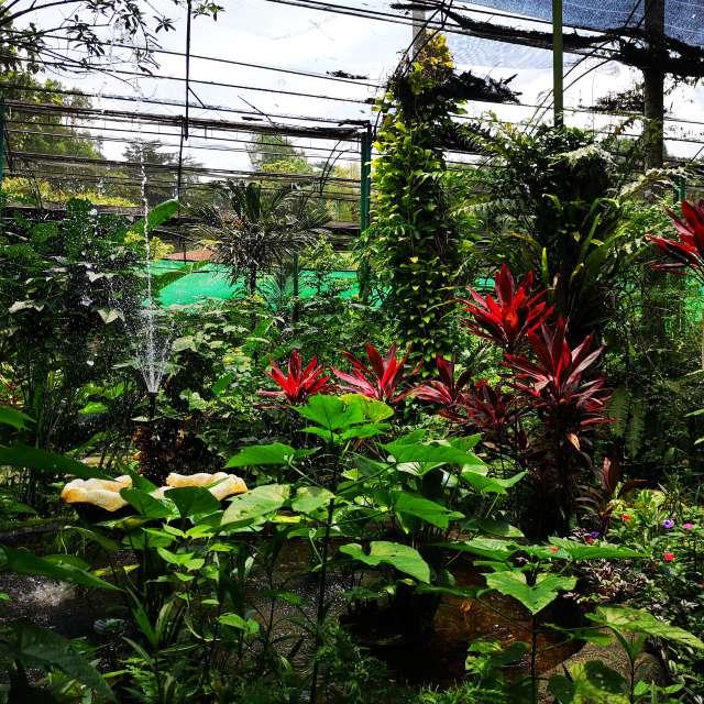 Botanical garden - Malaysia