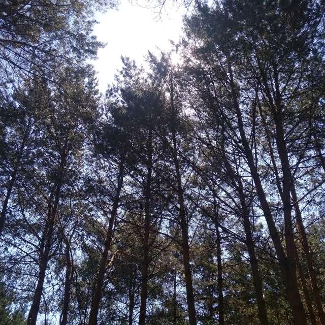 Drzewa w słońcu