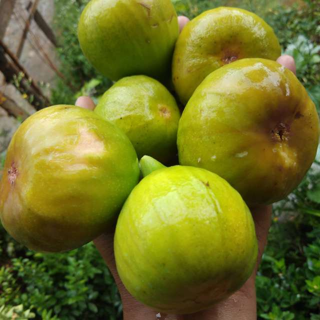 figs, fruits, food