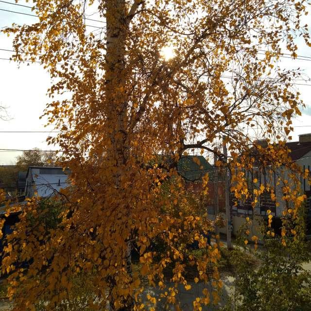 Золотая осень на Урале