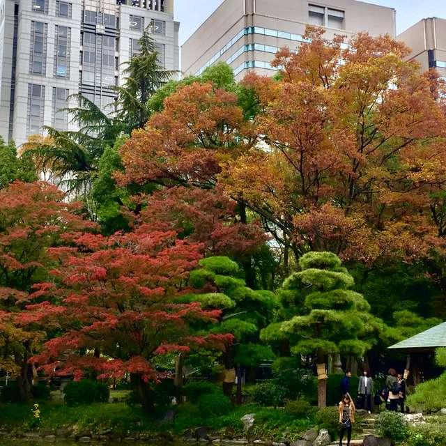 雲形池の紅葉