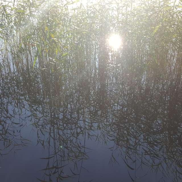 Тростник и солнце