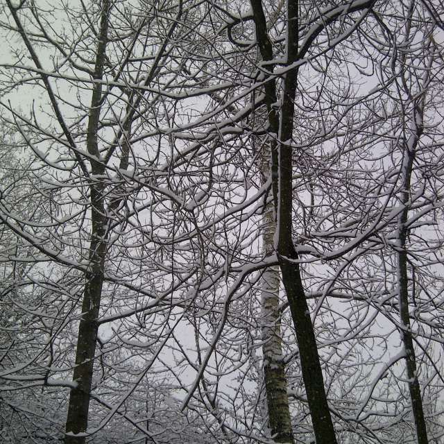 Trees covered with snow 2