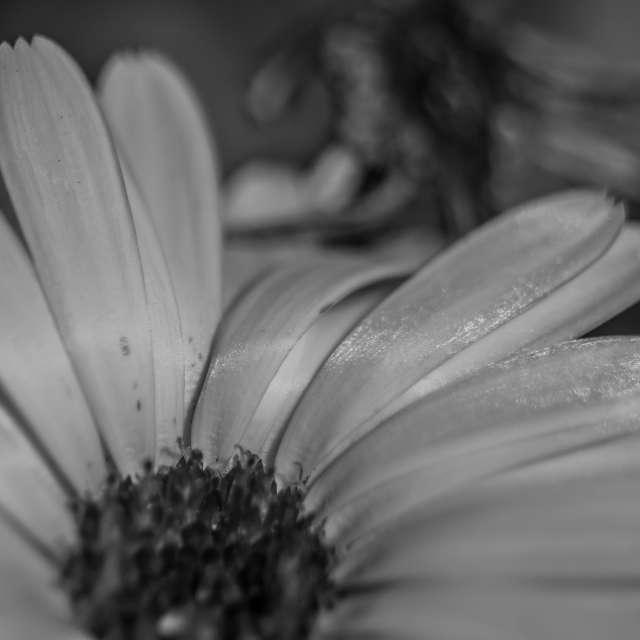 Kwiat w macro
