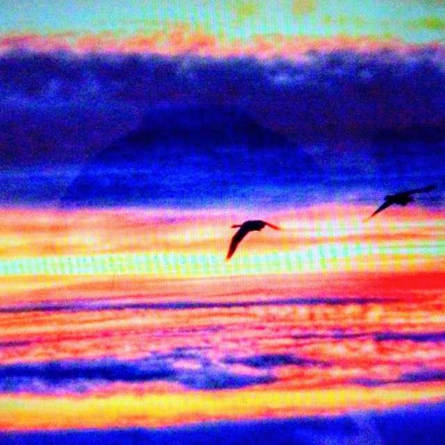 Ducks Flying in Sunset