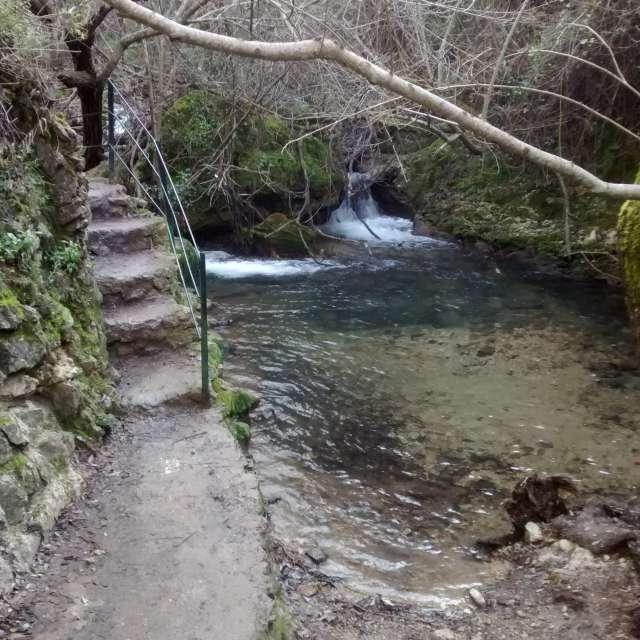 Rio del bosque