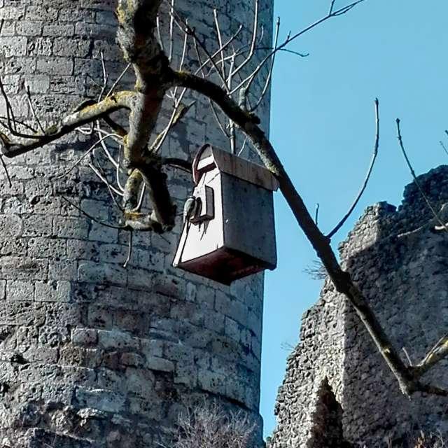 """Vogel am """"Haus"""""""