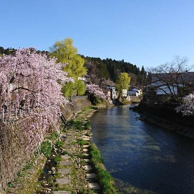 桜がまだ楽しめる