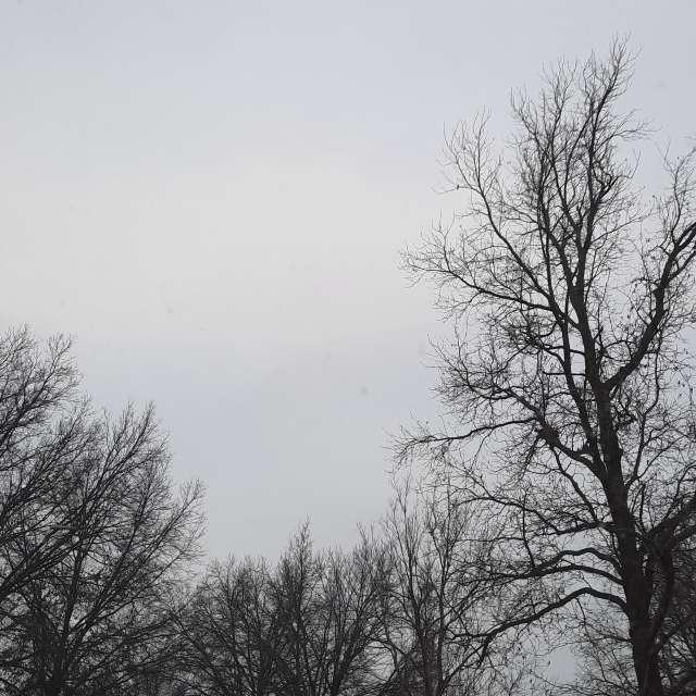 Overcast trees