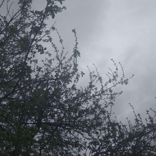 Майская погода