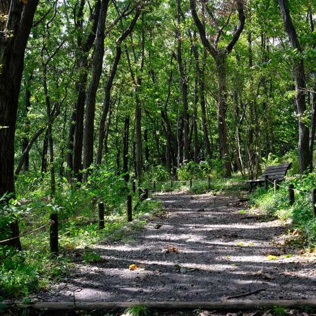 新緑の木漏れ日。府中市郷土の森博物館にて